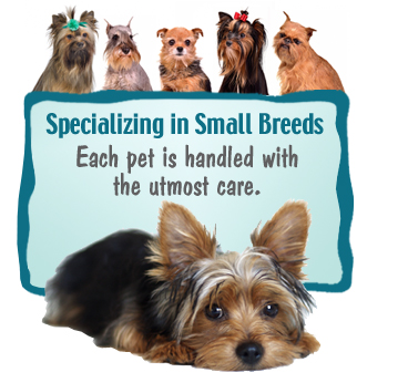 Specializing in Small Breeds. Each pet is handeled with the utmost care.